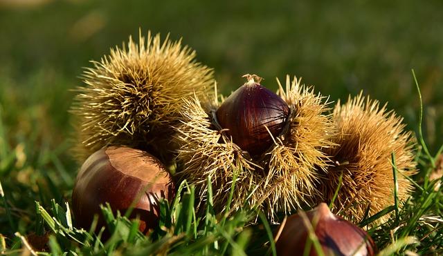 Le castagne, un frutto scelto con attenzione (e come abbinarlo)